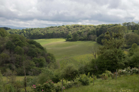 Jurançon paysage bois sacré Soupçons en Jurançon